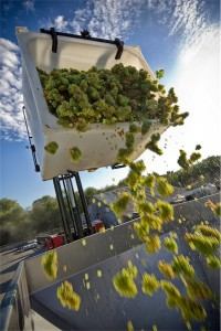 Winery Tour gets you close to the action