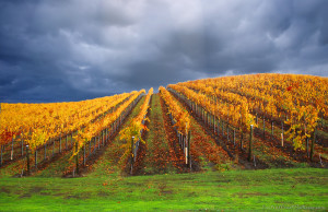 Capture the changing vineyard colours on the tour